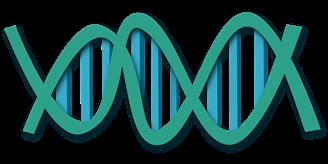 Генная мутацыя выклікае ў людзей прагу падарожжаў