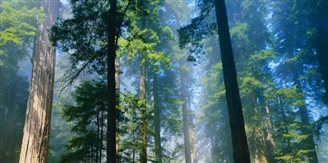 EuGH droht Polen mit Zwangsgeld bei weiterer Abholzung von Białowieża-Urwald