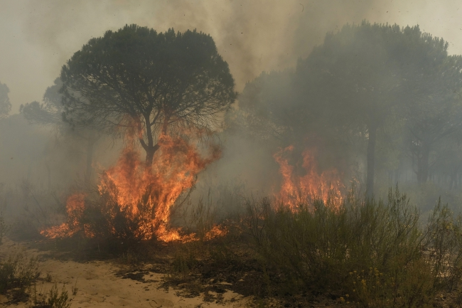 Flames rage through a forest in southern Spain. Photo: EPA/Julian Perez.