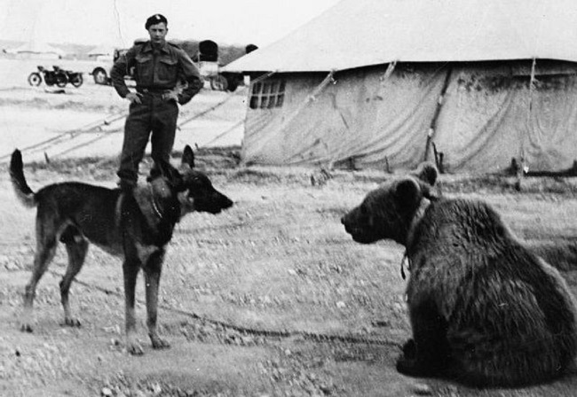 Wojtek the Bear eyes a dog in the Middle East. Photo: Wikimedia Commons (Public Domain).