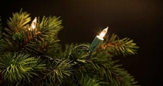 POLSKI FUSION :: Scented Christmas