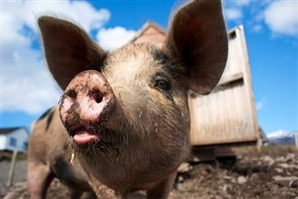 Ukraine bans Polish pork imports