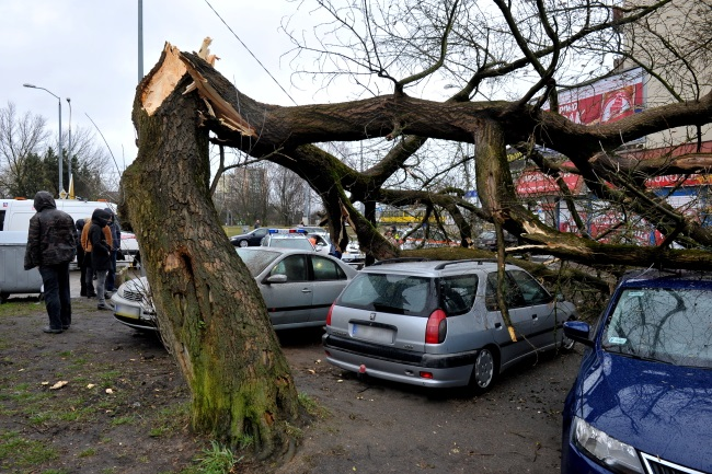 Tree snapped by winds in Szczecin, northwest Poland. Photo: PAP/Marcin Bielecki