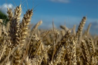 Agriculture losses could add up to PLN 30 bln