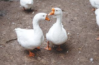 Polish poultry rejected by some importers