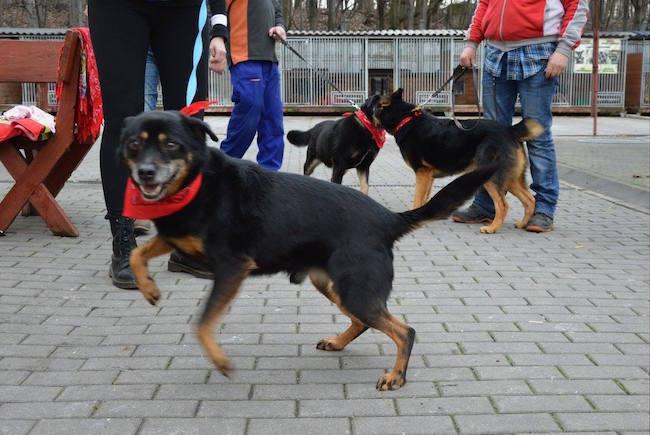 Собаки из приюта в Хожуве во время акции
