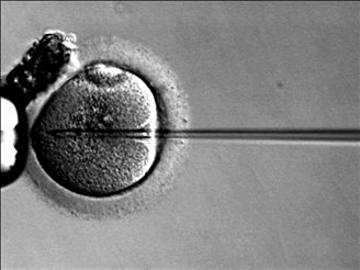 IVF bill stalls in Senate c