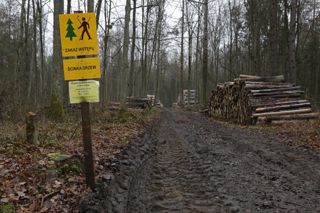 Bialowieza forest: European Union threatens Poland with fine over logging