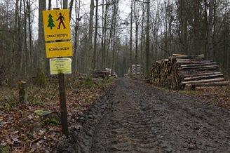 Poland, EU at loggerheads over forest