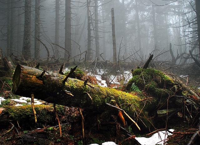Стары лес