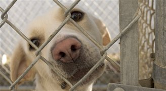 Stray dog starred in Oscar-winning Ida, now awaits adoption at shelter
