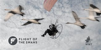 Q & A Flight of the Swans