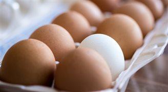 Нидерланды обнаружили сальмонеллу в яйцах из Польши