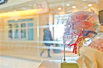 «Мозкомаячня, або 21 міф про мозок і те, як він насправді діє»