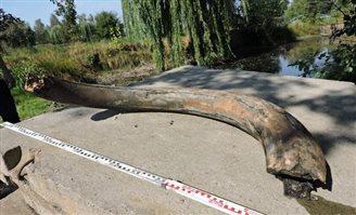 Polish teenager stumbles across mammoth tusk