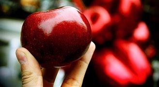 ЕС компенсирует польским фермерам часть средств за непроданные яблоки