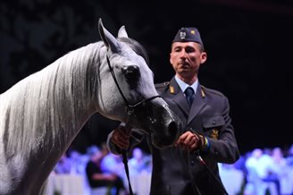 Polish-bred Arabian horses auctioned off