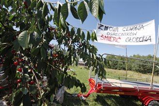 Soft fruit farmers raise alarm over low prices