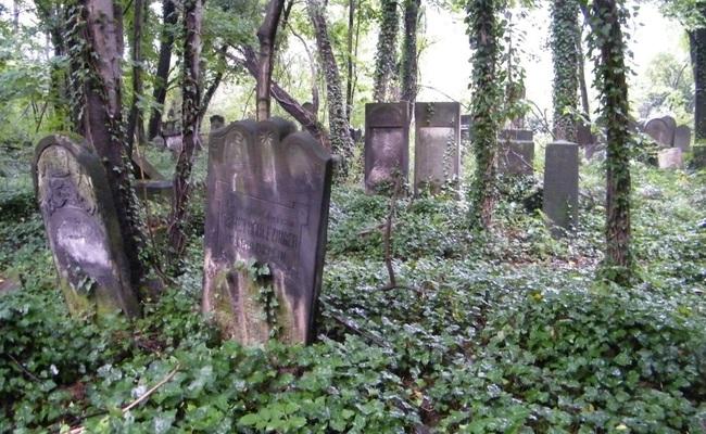 Tombstones at the Jewish Cemetery in Częstochowa. Photo: wikimedia commons