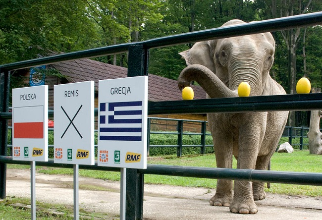 Citta the elephant in 2012. Photo: Palukopa/Wikimedia Commons (CC BY-SA 4.0)