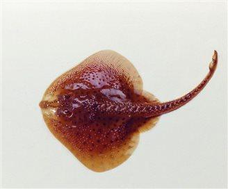 Навукоўцы стварылі ўнікальнага жывога робата