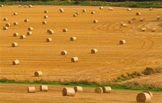 Cereal harvest falls off