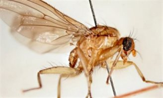 Fly named after Polish MP