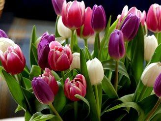 26 травня в Польщі святкують День матері
