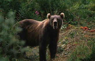 Bear attacks during search for missing man