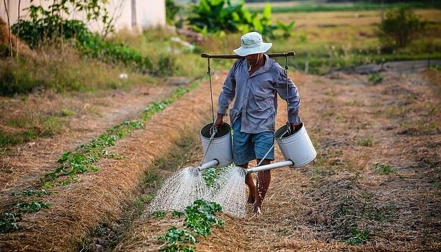 Фермер поливает урожай
