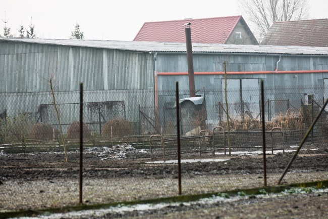 Goose farm in Deszczno, western Poland, hit by bird flu. Photo: PAP/Lech Muszyński