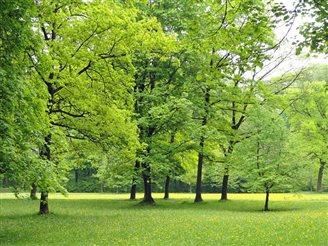 Litwa: Park przy dworku Piłsudskiego zostanie odnowiony