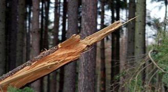 Последствия ураганов в августе 2017 года в Польше: уничтожено 80 тыс. га леса