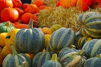 POLSKI FUSION :: Pumpkin prime