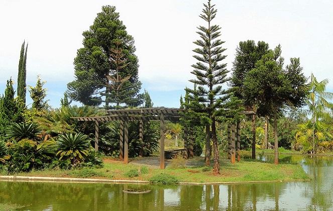 Ботанический сад столице Бразилии.