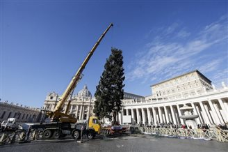 Polish Christmas tree put up in St. Peter's Square