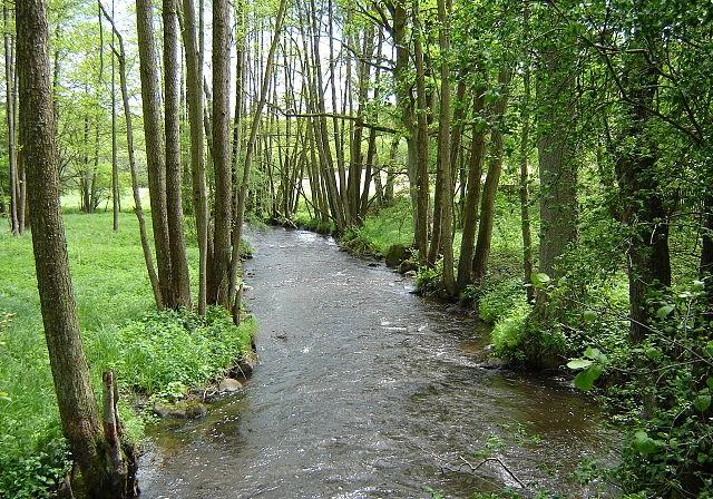 Part of the Prusina river. Photo: Włodzimierz Wysocki/Wikimedia Commons (CC BY-SA 3.0)