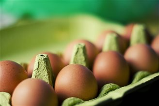 Seven EU countries imported salmonella-infected eggs from Poland