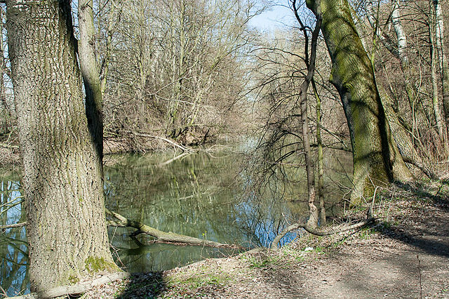 The Morysin nature reserve. Photo: wikimedia commons/Dariusz Kowalczyk