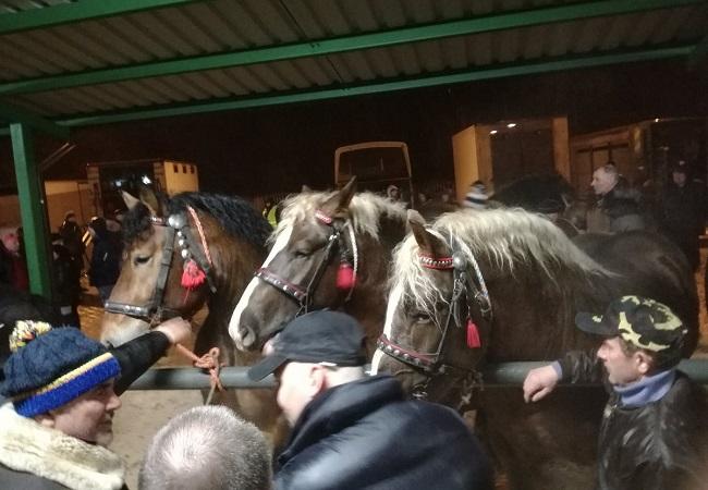 Horses at the fair in Skaryszew, Poland. Photo: Twitter.com/@nataliazyto.
